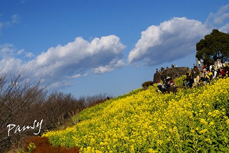 雲と・・菜の花。。2010 吾妻山公園 8