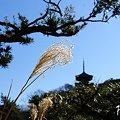写真: 早春の三渓園・・2