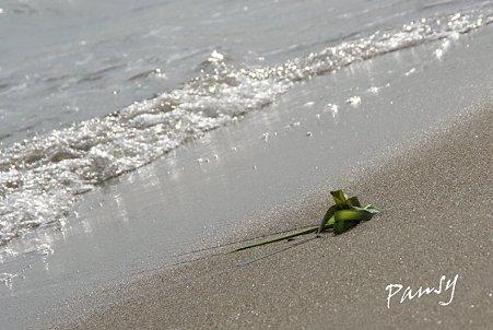 残された海藻・・