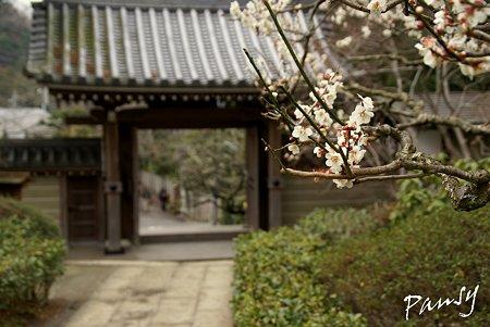 梅見月の浄妙寺・・5
