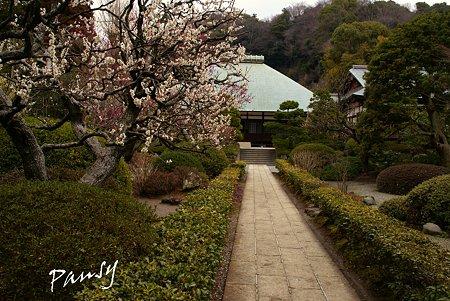 梅見月の浄妙寺・・6