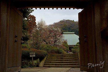 梅見月の浄妙寺・・7