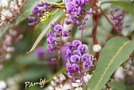 purple..2