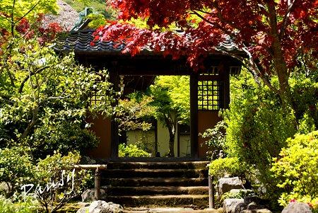 新緑の海蔵寺・・1