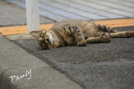 瑞穂埠頭の猫たち・・5