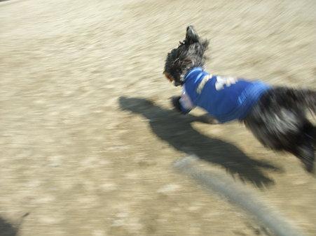 走る、走る~~♪(爆風スランプ)