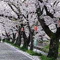 Photos: 春を歩こう