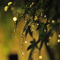 Photos: 梅雨のイルミネーション☆