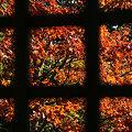 写真: 格子窓の向うの紅葉!(091121)