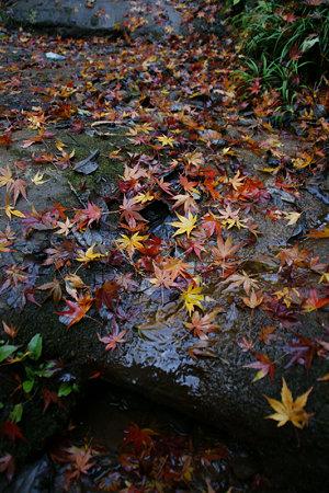 落ち紅葉風景!(091212)