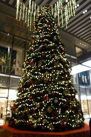 クリスマスツリー!(20091222)