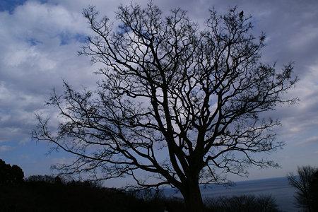 天に伸びる、エノキの大木!(100116)
