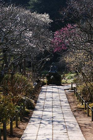 参道を彩る紅白の梅!(100130)