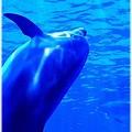 青色の写真が好き