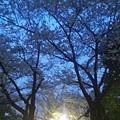 写真: お花見ちゅう~