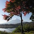 写真: 091106-5紅葉と富士山と河口湖2