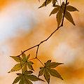 写真: 趣の葉