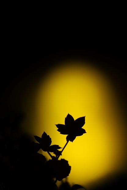 夕暮れに咲く