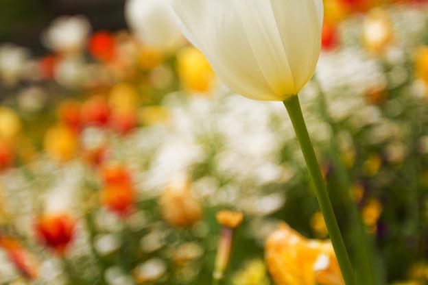 斜面を流れる花