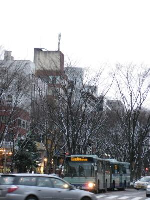 定禅寺通りのケヤキ並木も雪景色
