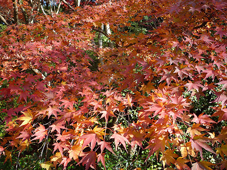 御船山楽園の紅葉(5)