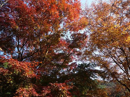 御船山楽園の紅葉(9)