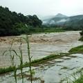 大雨で増水した山国川 もう危険!