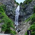 ふくべの大滝(2) 新緑の白山スーパー林道