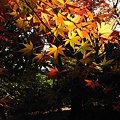 Photos: 庭園紅葉