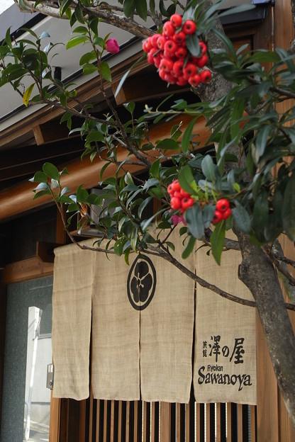 Photos: 澤の屋に赤の実