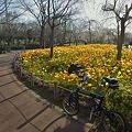 Photos: 春☆爛漫