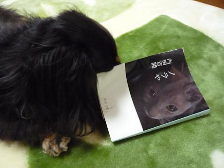 ミドちゃんの本