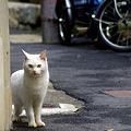 Photos: 猫と三輪