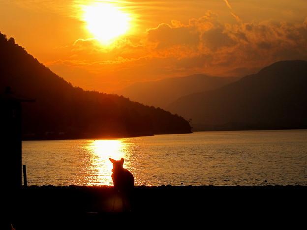 宮島にて鹿と夕日の光の道です。