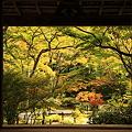 Photos: 京都にて室内から外を撮影しました。