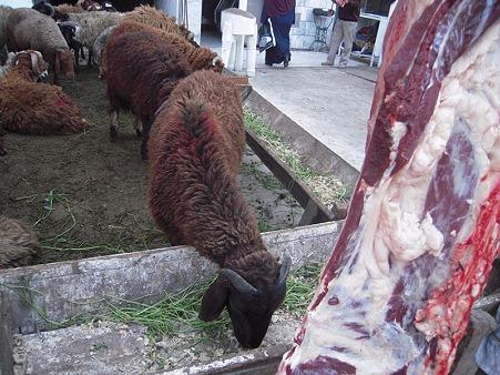 生きている羊と死んでいる羊